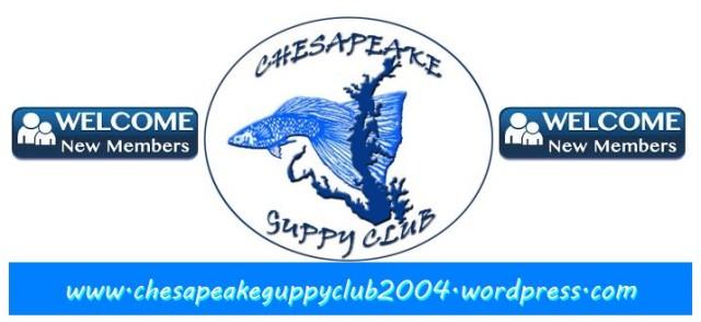 Chesapeake Guppy Club