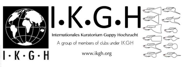 I.K.G.H guppies