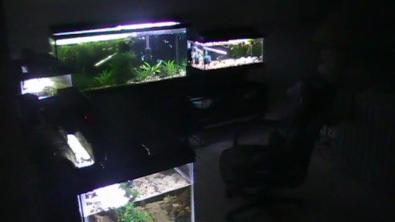 igors-fish-room