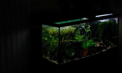 igors-fish-tank