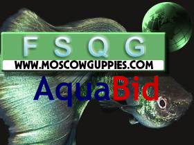 moscow-guppies-on-aquabid