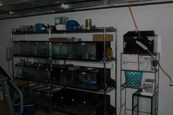 Guppy Breeding Setup For Sale