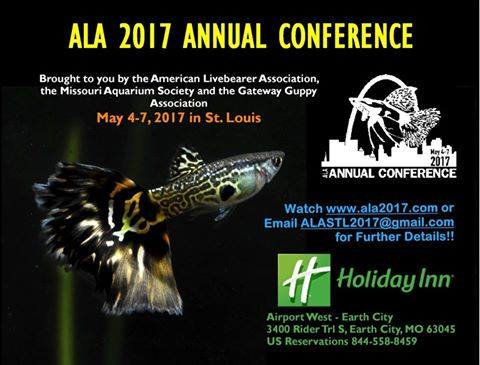 the-american-livebearer-convention