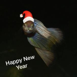 Happy Guppy New Year