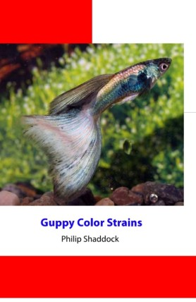 Guppy Color Strains