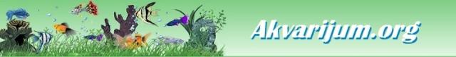 Akvarijum Gupike Forum