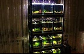 Stalaze sa akvarijumima za uzgoj ribica gupi gupija gupika