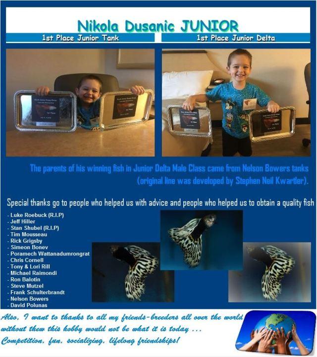 Nikola Dusanic IFGA show quality guppy