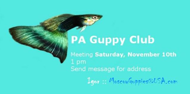 PAGC Pennsylvania Guppy Club