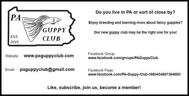 Pennsylvania Guppy Club