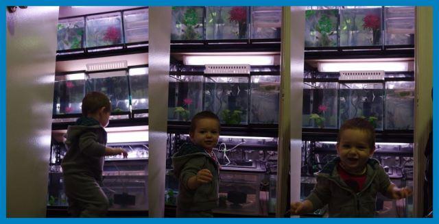 Nikolini akvarijumi - akvariji sa gupikama - gupijima