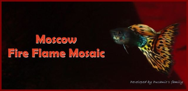 Moscow Fire Flame Mosaic