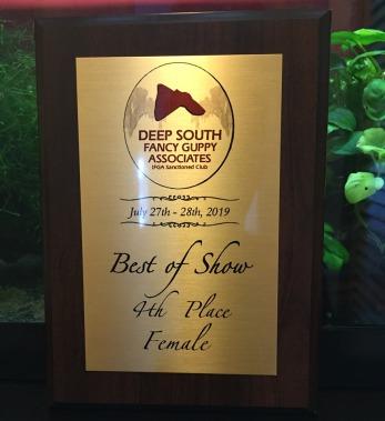 Nikola's Best of show guppy award