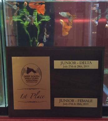 Nikola's DSFGA IFGA guppy show guppy award