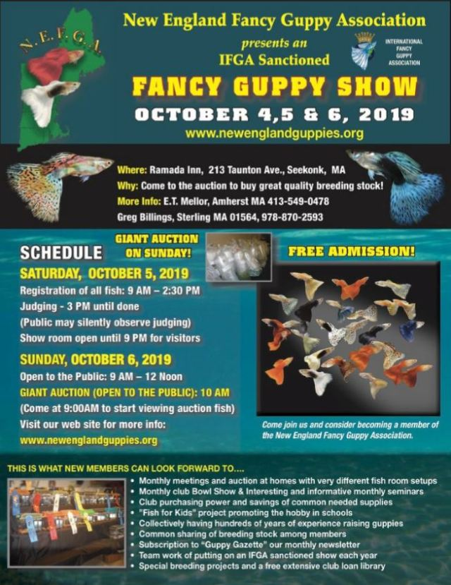 IFGA Annual Show October 2019