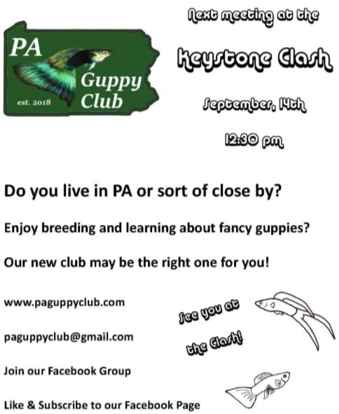 PA Guppy Club at Keystone Clash