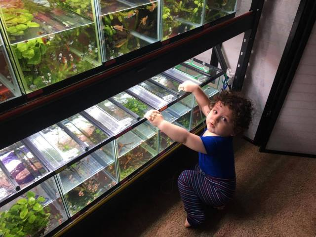 The youngest family member pretends to clean the tanks